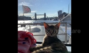 Adorable kitten goes sightseeing in London