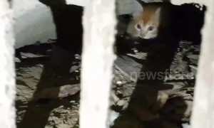 Frightened kitten rescued after hiding in storm drain to escape pack of wild dogs