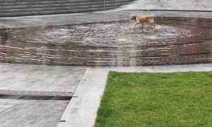 Playing Pup Finds Fun in a Fountain
