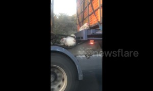 Chickens cling to truck going 100 kph after falling out crate on Melbourne highway