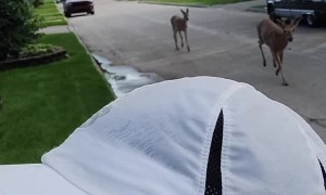 Random Deer Join Run