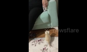 Kitten has an adorable attempt to jump onto a couch in Turkey