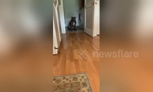 'Why are you so afraid?' US dog is terrified of stepping on kitchen floor