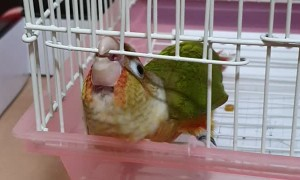 Crafty Bird Finds Way Out of Cage