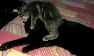 Kitten Makes Bad First Impression on Older Cat