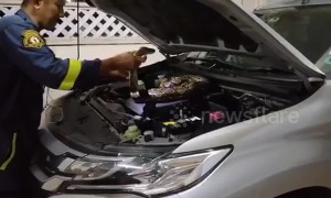 Huge python found on car engine in Thailand