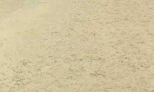 Special Dog Has Beach Fun