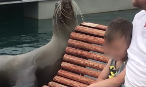 Sea Lion Performs on the Pier