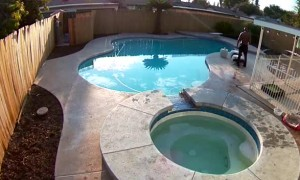 Man Jumps in Hot Tub to Save French Bulldog