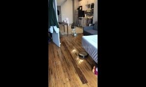 Roomba chases scared German shepherd around Tennessee living room