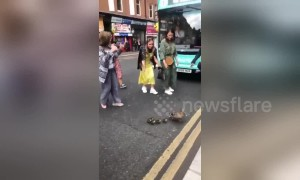 Glasgow locals form pathway for a family of ducks to cross busy road