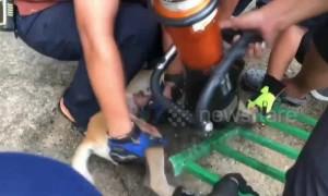 Hapless dog rescued after getting stuck in iron gate while sheltering from rain