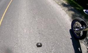 Two Wheeled Turtle Hero
