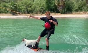 Doggo Rides Wakeboard like a Pro