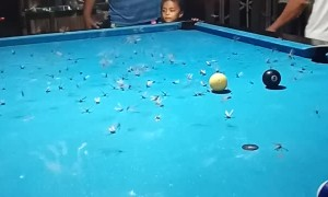 Playing Billiards, Eating Bugs