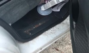 Roaches Scatter in Filthy Vehicle
