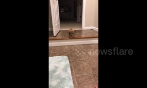 Tiny US puppy whines as she attempts to get down a step