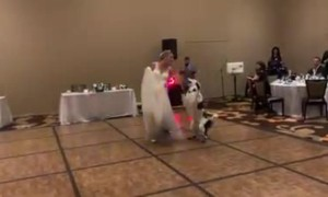 Dog dances and does tricks with bride at her wedding reception