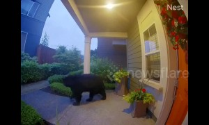 Huge black bear spotted roaming through Washington neighbourhood