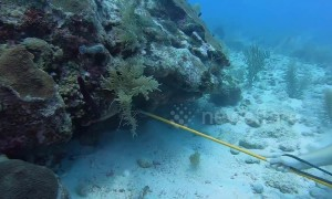 Divers in Belize remove 60 lbs of invasive lionfish from the Caribbean Sea