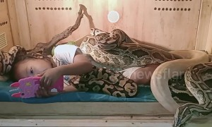 Indonesian girl calmly watches cartoons on phone while covered head to toe in snakes