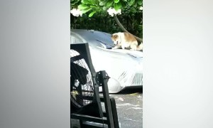 Furious driver calls police after catching neighbour's husky climbing on her car