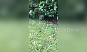 Sneaky UK cat ambushes frog, but only for a friendly boop