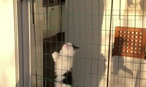 Houdini Kitten Escapes with Ease