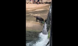 Genius dog plays fetch all by himself in the scorching Texas heat