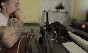 Dog is Excellent Blues Singer