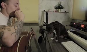 Dog is Excellent Blues Singer