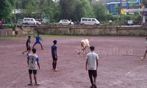 Watch the Indian viral superstar 'Cow-naldo' take on locals at football