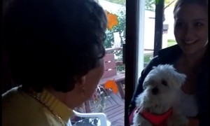 90-year-old woman's emotional reaction to surprise puppy
