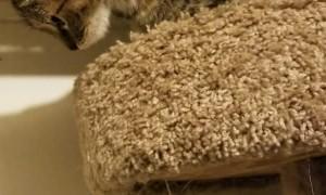 Scaredy Cat Has Sensitive Paws