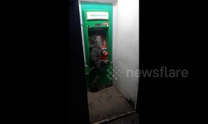 Giant monitor lizard spotted at ATM machine in Thailand