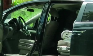 Bear Opens up Car Doors like a Boss