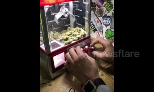 Someone plays marijuana claw crane machine game
