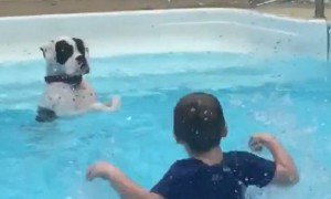 Dog hilariously mimics kids in pool and learns to splash
