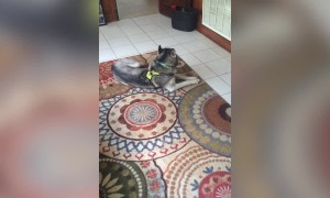 Guilty Dog Gets Confronted – LOL