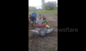 Shocking moment locals ride endangered leatherback turtle on Indonesian beach