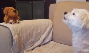 Dog has priceless conversation with mimicking toy dog