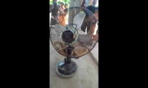 Indian resident shocked to find deadly cobra curled up inside fan in bedroom