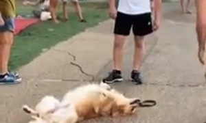 Super relaxed dog sprawls out at the park