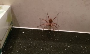 Spider vs Cockroach Battle in the Bathroom