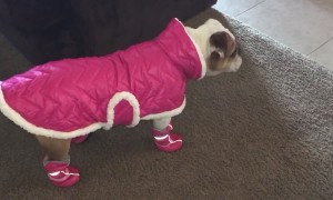 Dog Rocks Latest Canine Fashions