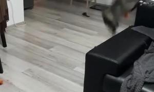 Cat Plays Catch