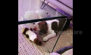 This puppy is baffled by glass separating him from his favourite toy