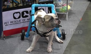 Heartwarming moment disabled dogs try out canine wheelchairs