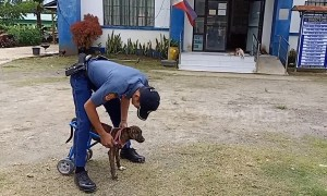 Disabled stray dog can finally walk again thanks to kind policemen who made her a wheelchair