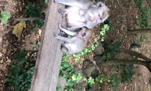 Protective Mother Monkey